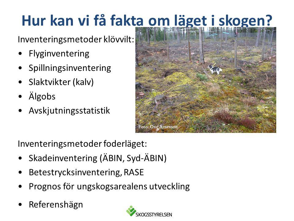 Hur kan vi få fakta om läget i skogen