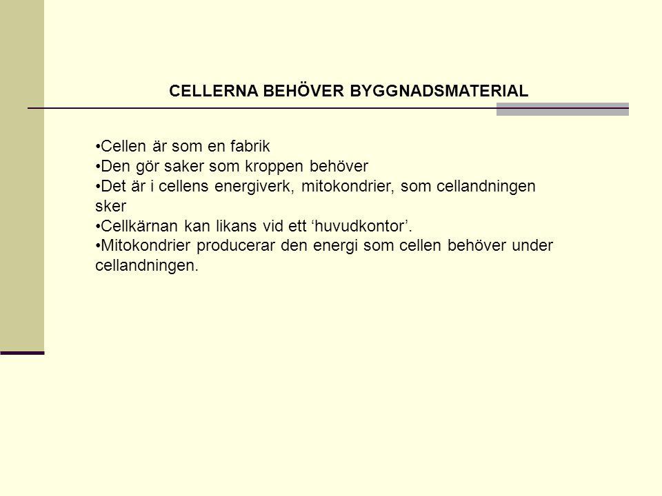 CELLERNA BEHÖVER BYGGNADSMATERIAL