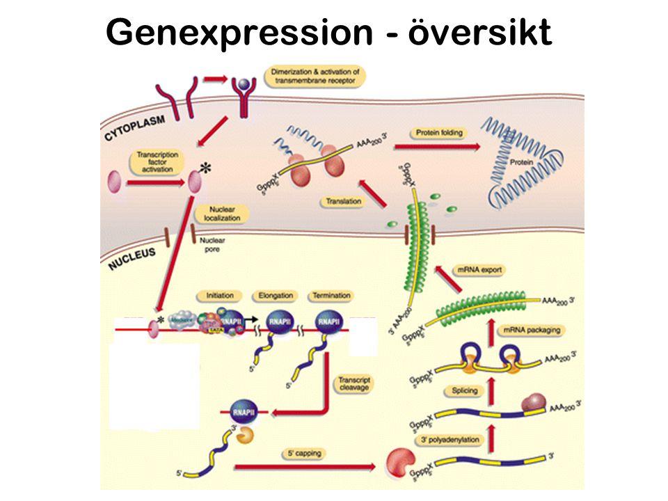 Genexpression - översikt