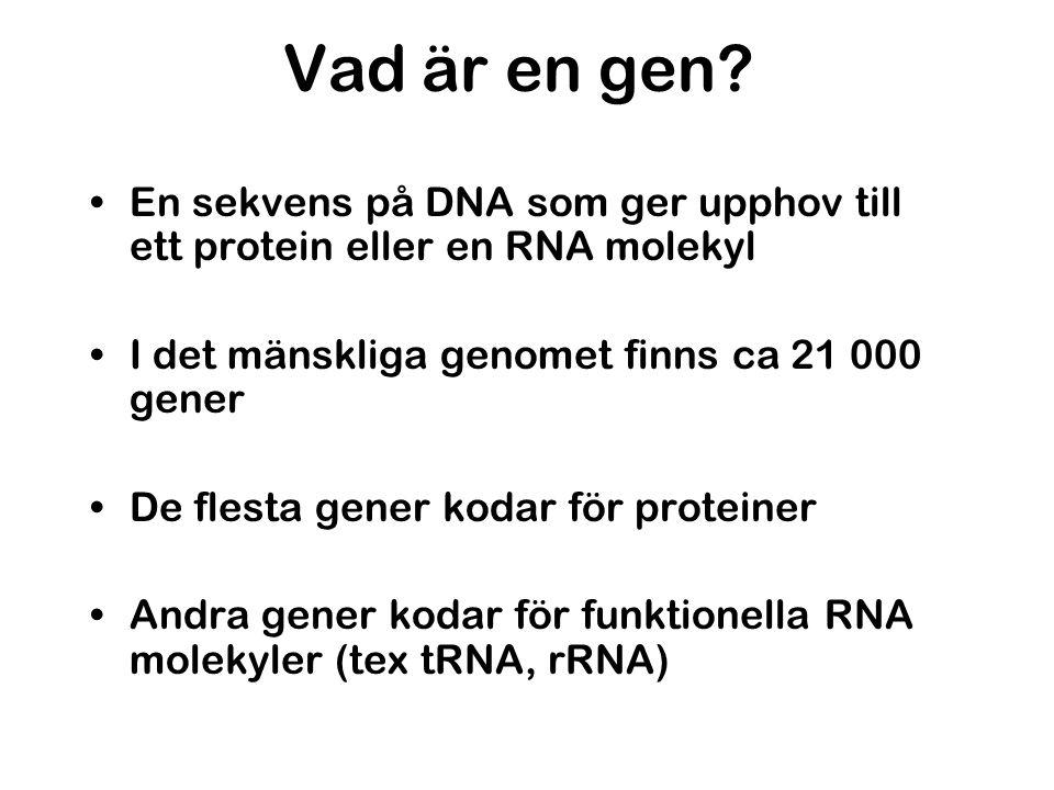Vad är en gen En sekvens på DNA som ger upphov till ett protein eller en RNA molekyl. I det mänskliga genomet finns ca 21 000 gener.