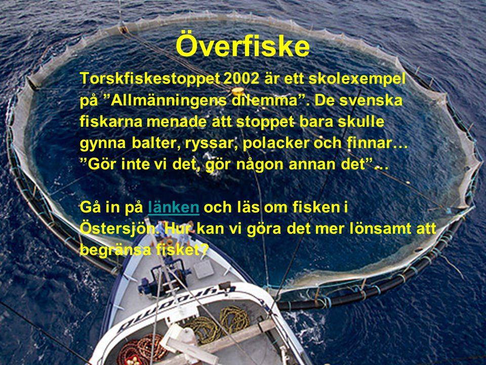 Överfiske Torskfiskestoppet 2002 är ett skolexempel