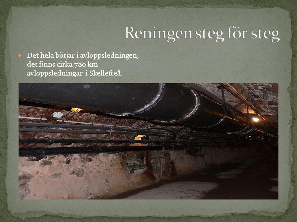 Reningen steg för steg Det hela börjar i avloppsledningen, det finns cirka 780 km avloppsledningar i Skellefteå.