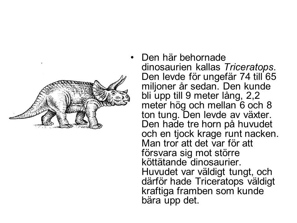 Den här behornade dinosaurien kallas Triceratops
