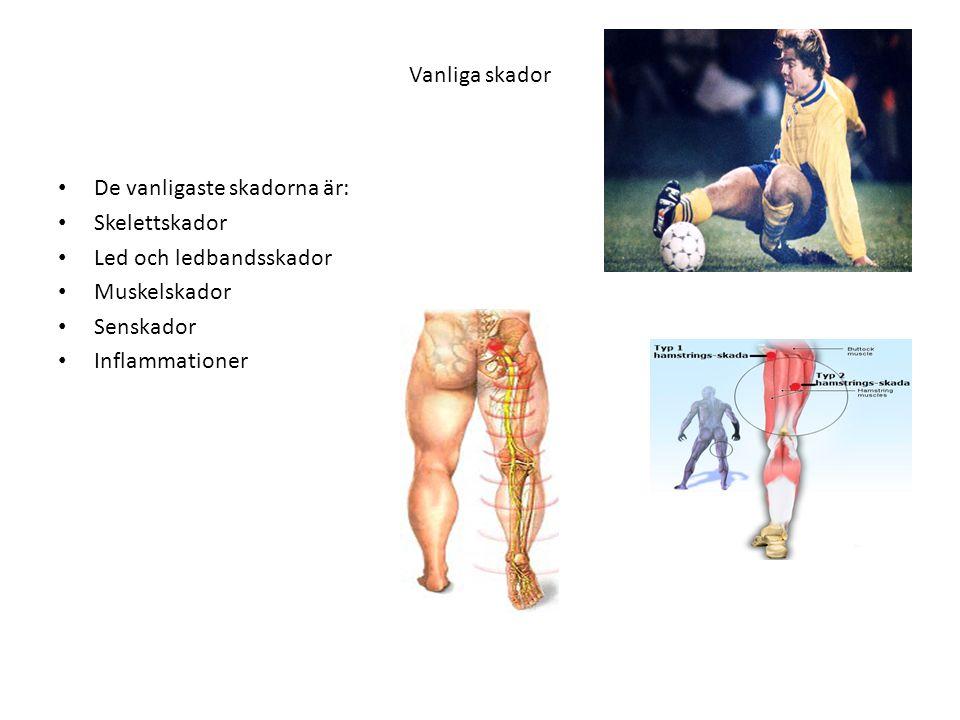 Vanliga skador De vanligaste skadorna är: Skelettskador. Led och ledbandsskador. Muskelskador. Senskador.