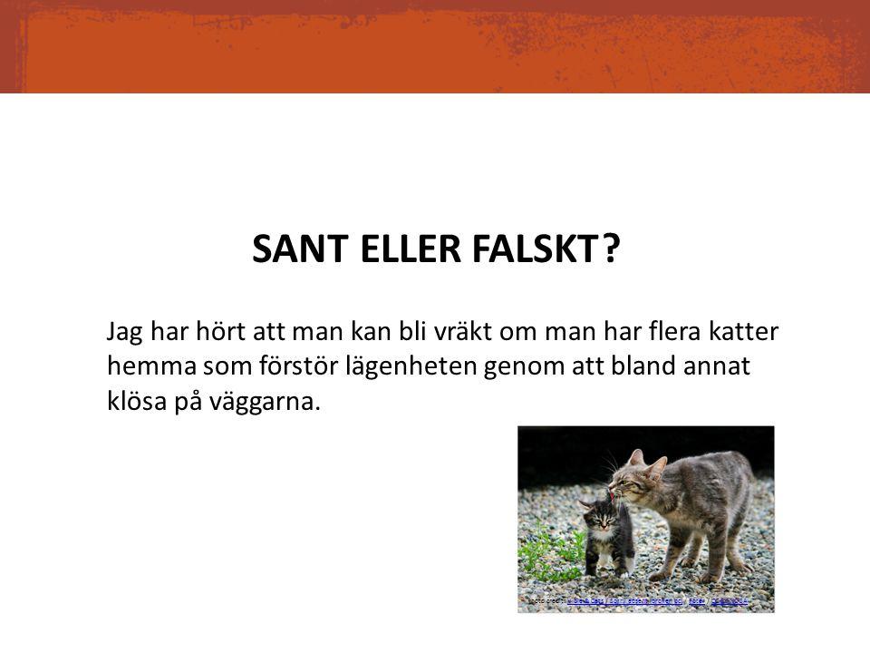 SANT ELLER. FALSKT.