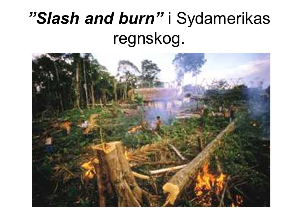 Slash and burn i Sydamerikas regnskog.
