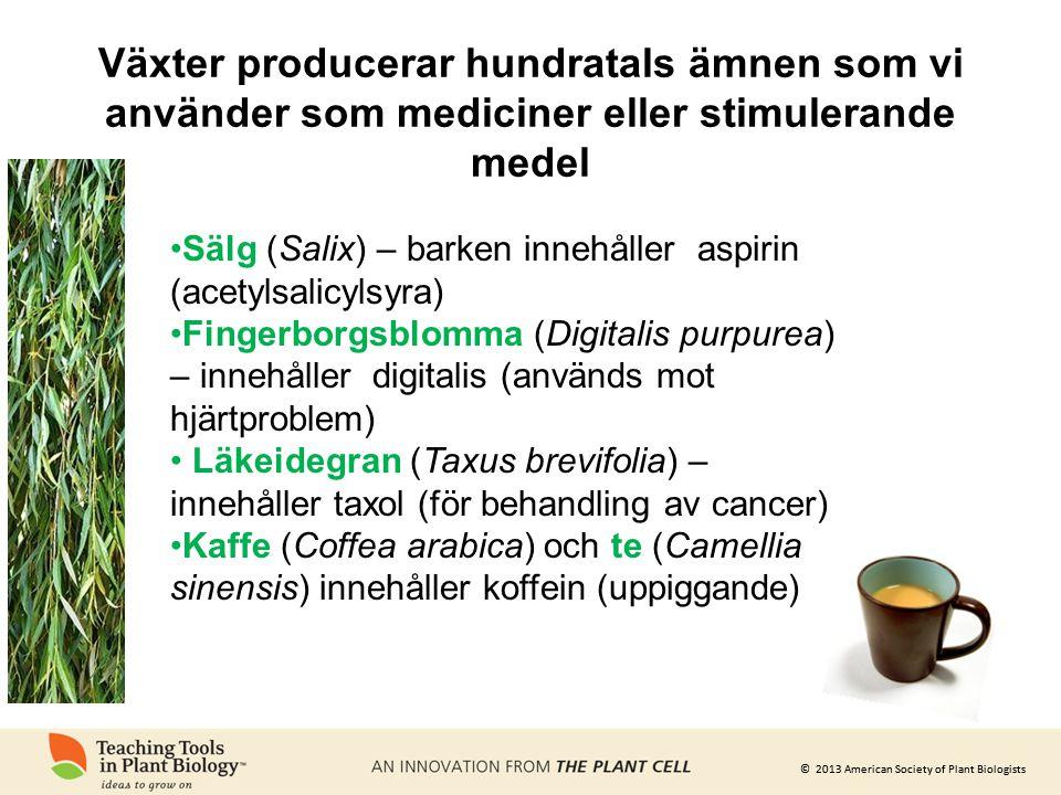 Växter producerar hundratals ämnen som vi använder som mediciner eller stimulerande medel