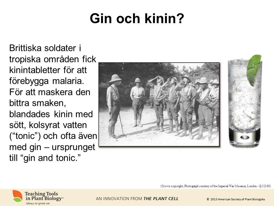 Gin och kinin