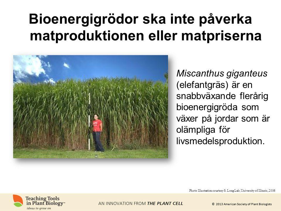 Bioenergigrödor ska inte påverka matproduktionen eller matpriserna