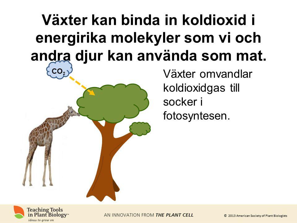 Växter kan binda in koldioxid i energirika molekyler som vi och andra djur kan använda som mat.
