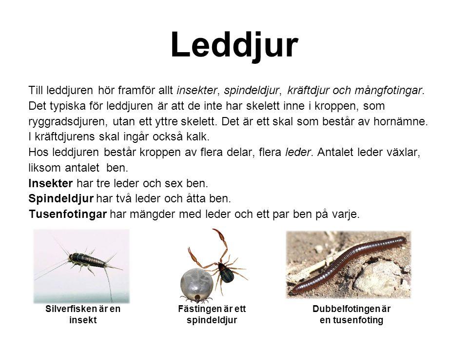 Leddjur Till leddjuren hör framför allt insekter, spindeldjur, kräftdjur och mångfotingar.