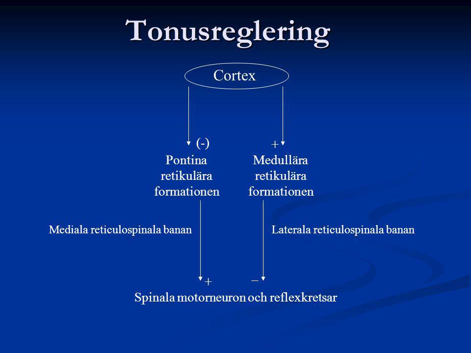 Tonusreglering Cortex (-) + Pontina retikulära formationen