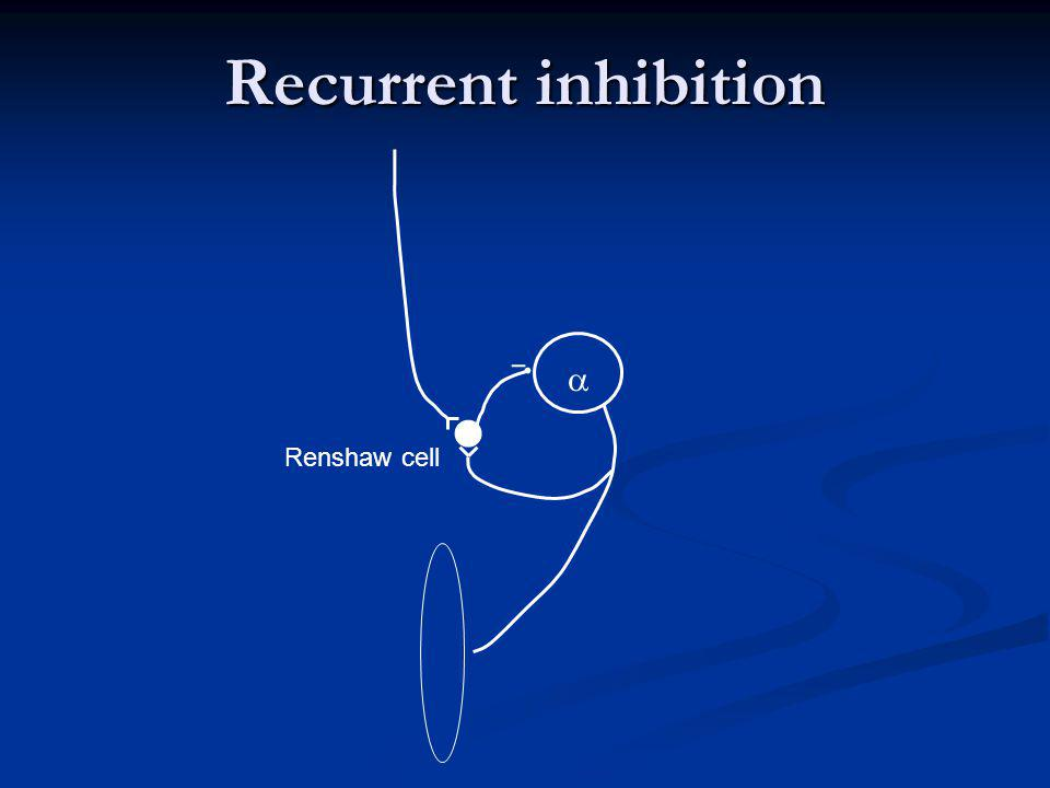 Recurrent inhibition a Renshaw cell