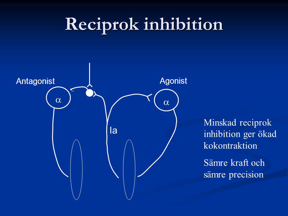 Reciprok inhibition a. Ia. Agonist. Antagonist. Minskad reciprok inhibition ger ökad kokontraktion.