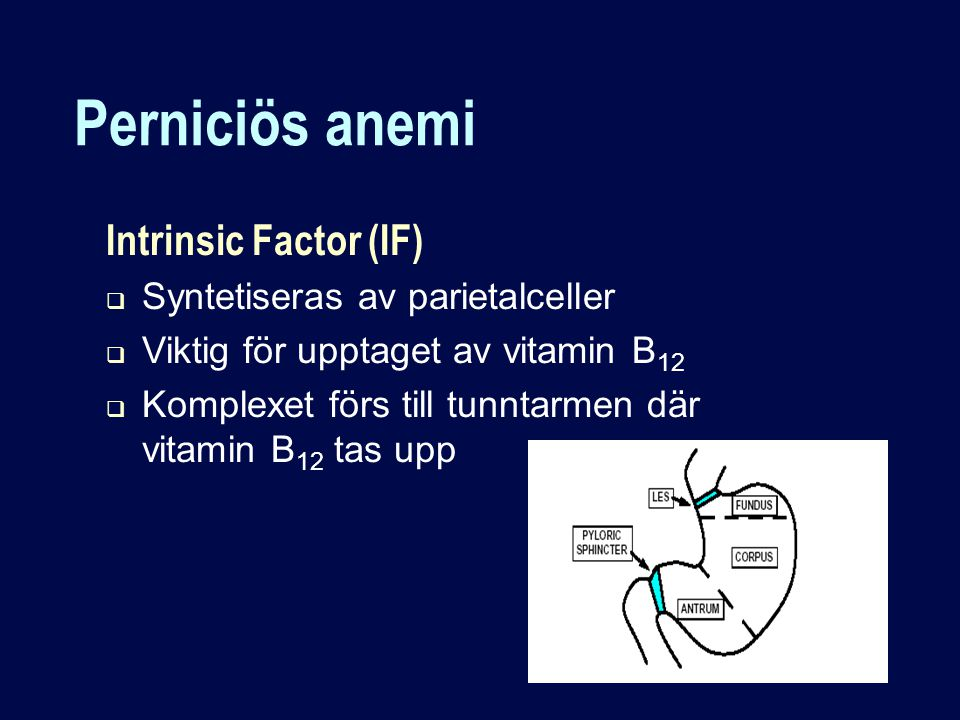 Perniciös anemi Intrinsic Factor (IF) Syntetiseras av parietalceller