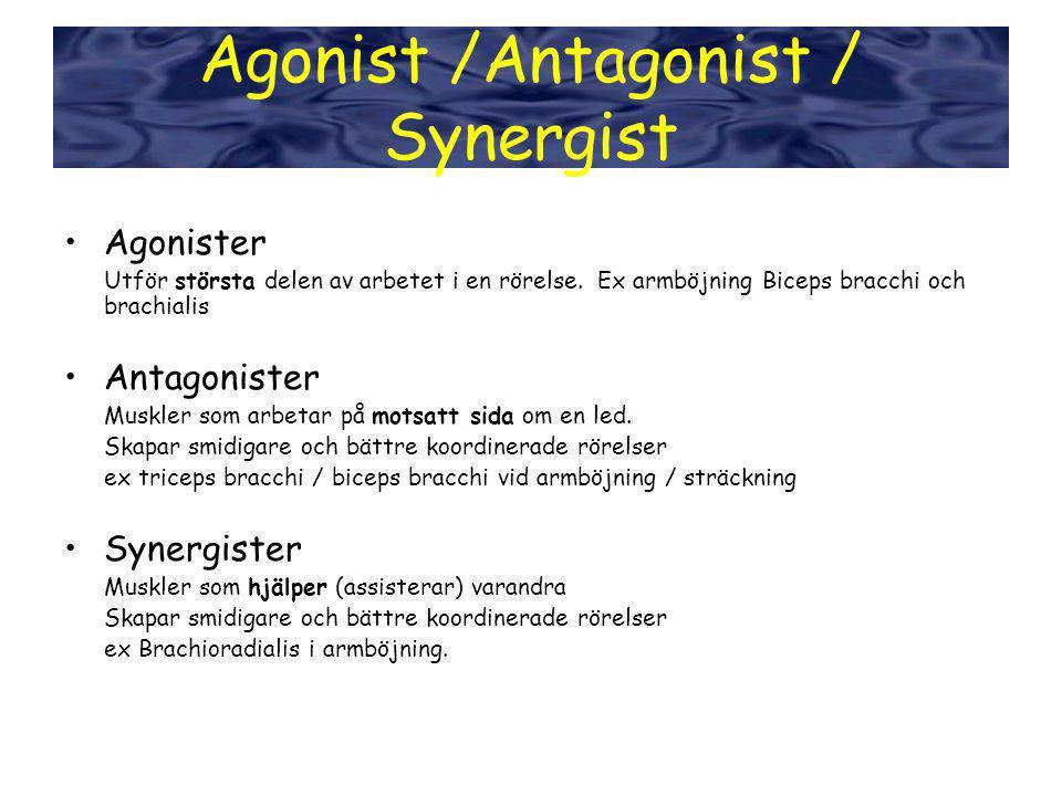 Agonist /Antagonist / Synergist