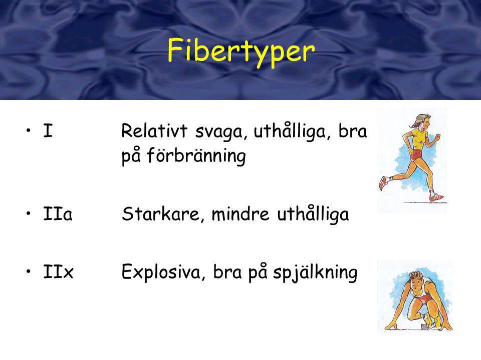 Fibertyper Fibertyper I Relativt svaga, uthålliga, bra på förbränning