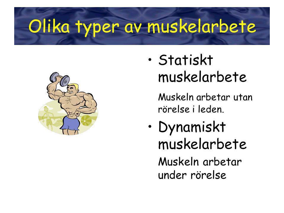 Olika typer av muskelarbete