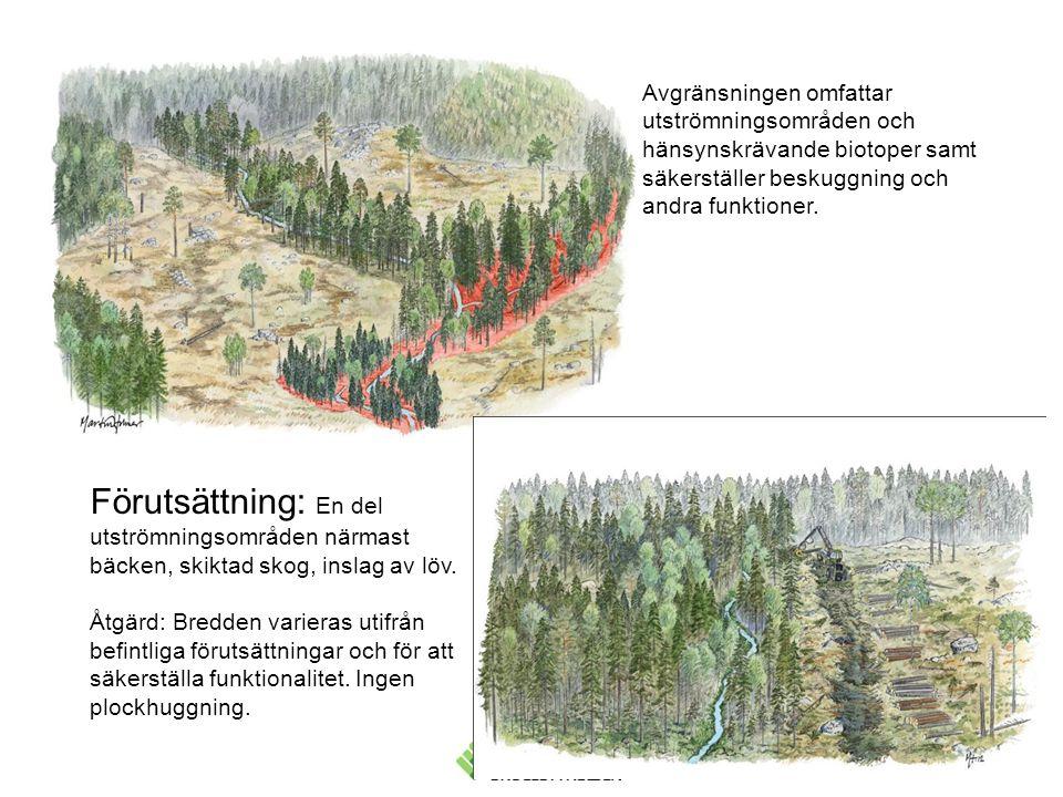 Avgränsningen omfattar utströmningsområden och hänsynskrävande biotoper samt säkerställer beskuggning och andra funktioner.