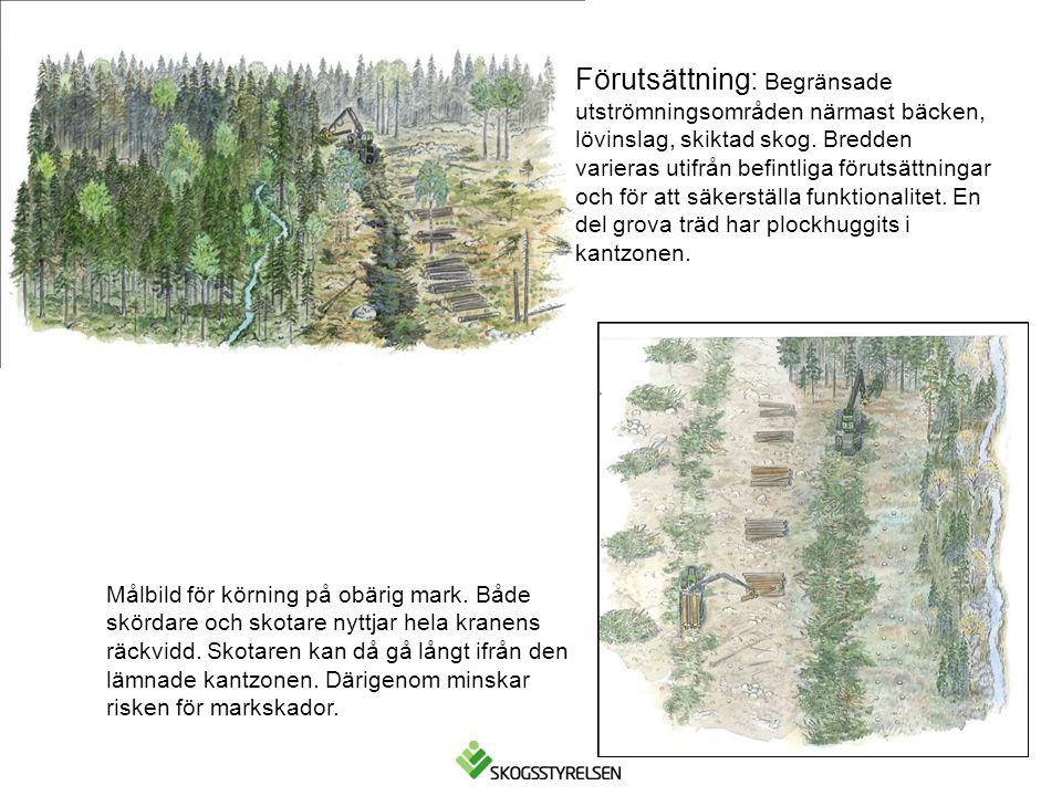 Förutsättning: Begränsade utströmningsområden närmast bäcken, lövinslag, skiktad skog. Bredden varieras utifrån befintliga förutsättningar och för att säkerställa funktionalitet. En del grova träd har plockhuggits i kantzonen.