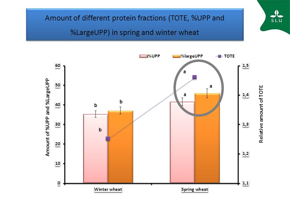 Amount of different protein fractions (TOTE, %UPP and %LargeUPP) in spring and winter wheat