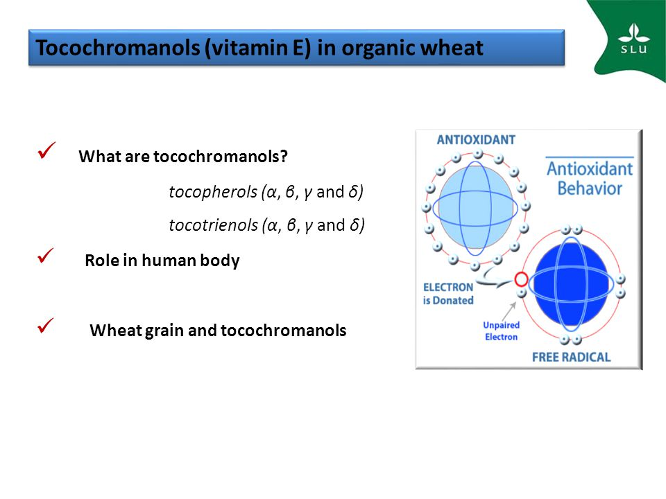 Tocochromanols (vitamin E) in organic wheat