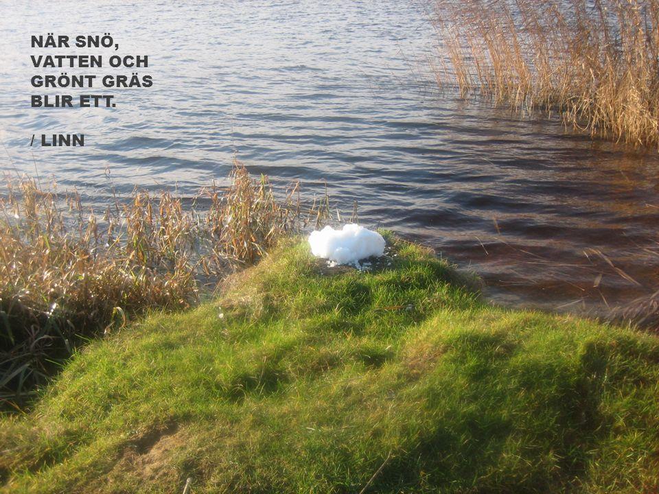 När snö, vatten och grönt gräs blir ett. / linn
