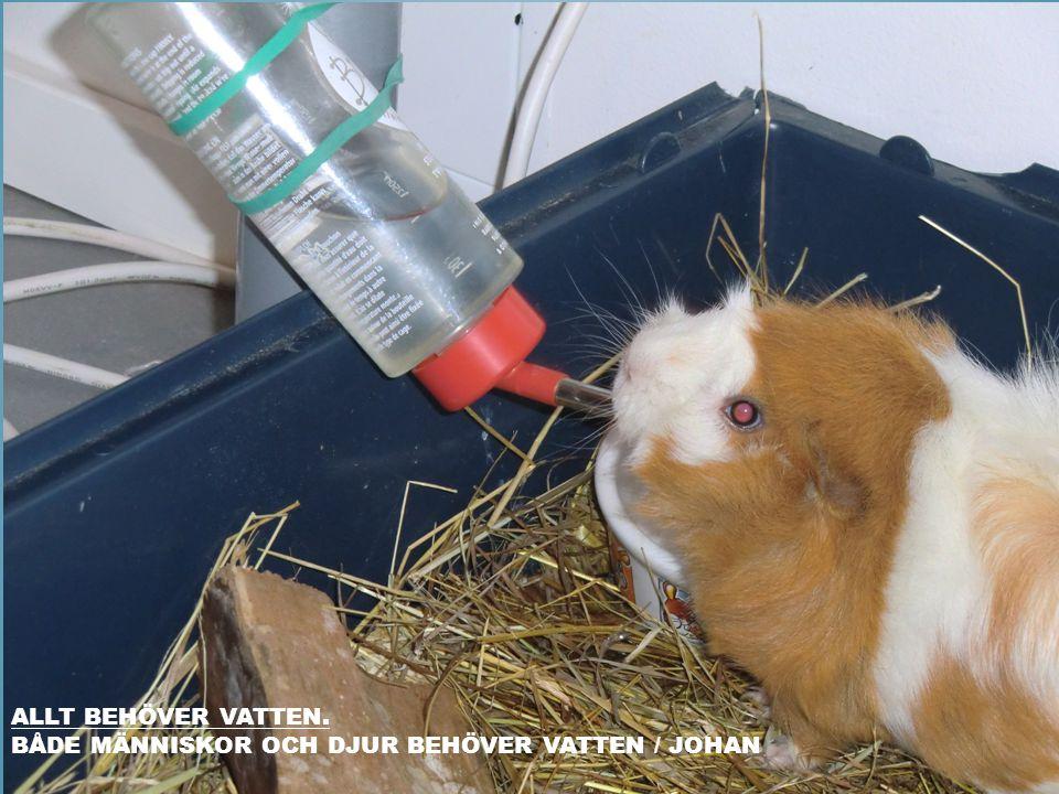 Allt behöver vatten. Både människor och djur behöver vatten / Johan