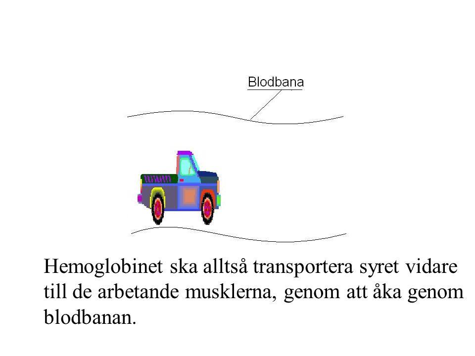 Hemoglobinet ska alltså transportera syret vidare