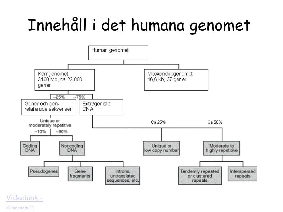 Innehåll i det humana genomet
