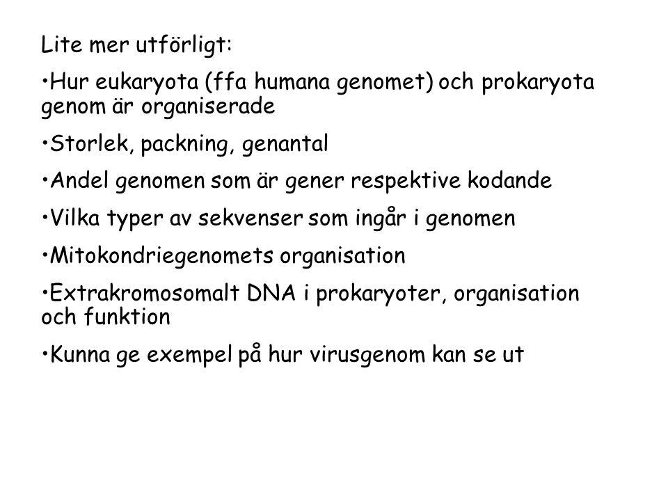 Lite mer utförligt: Hur eukaryota (ffa humana genomet) och prokaryota genom är organiserade. Storlek, packning, genantal.