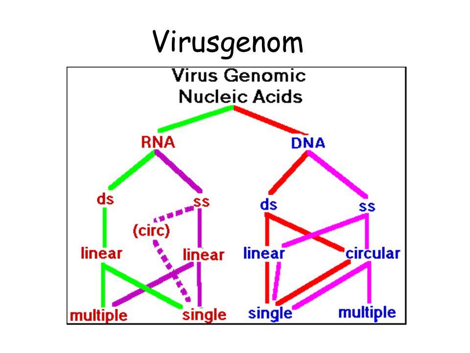 Virusgenom