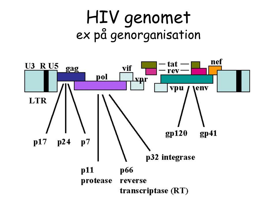 HIV genomet ex på genorganisation