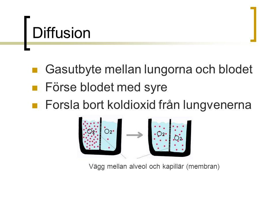 Diffusion Gasutbyte mellan lungorna och blodet Förse blodet med syre