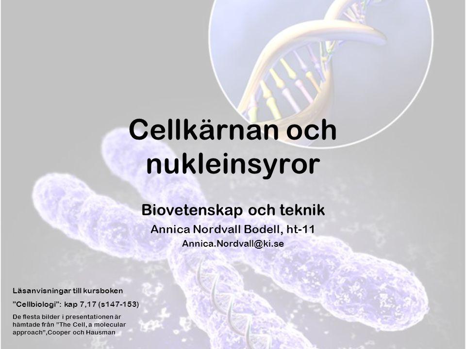 Cellkärnan och nukleinsyror