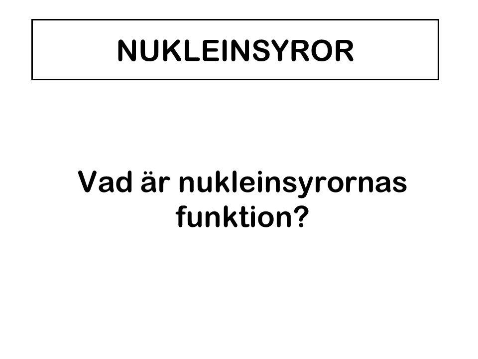 Vad är nukleinsyrornas funktion