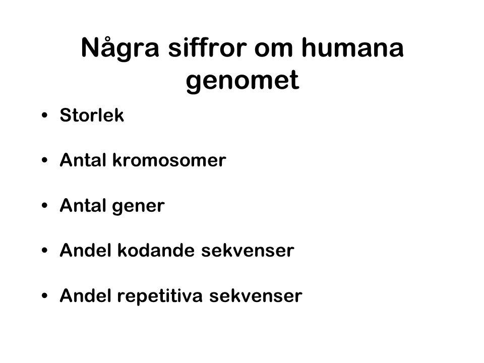 Några siffror om humana genomet