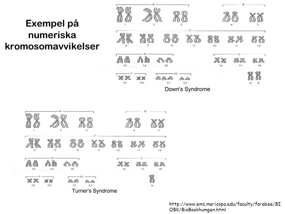 Exempel på numeriska kromosomavvikelser