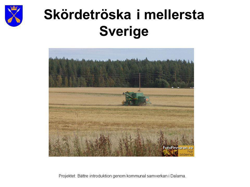 Skördetröska i mellersta Sverige