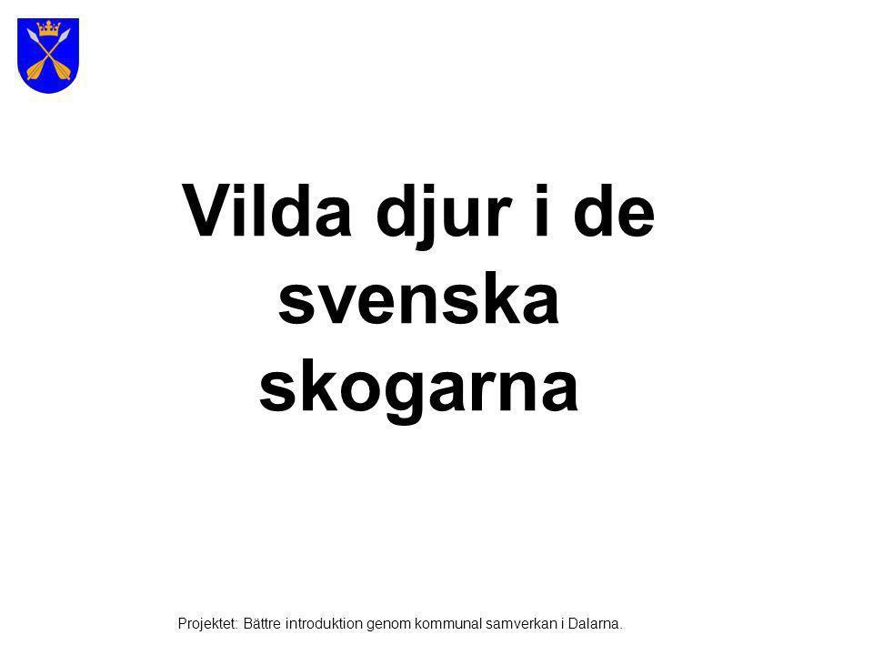 Vilda djur i de svenska skogarna