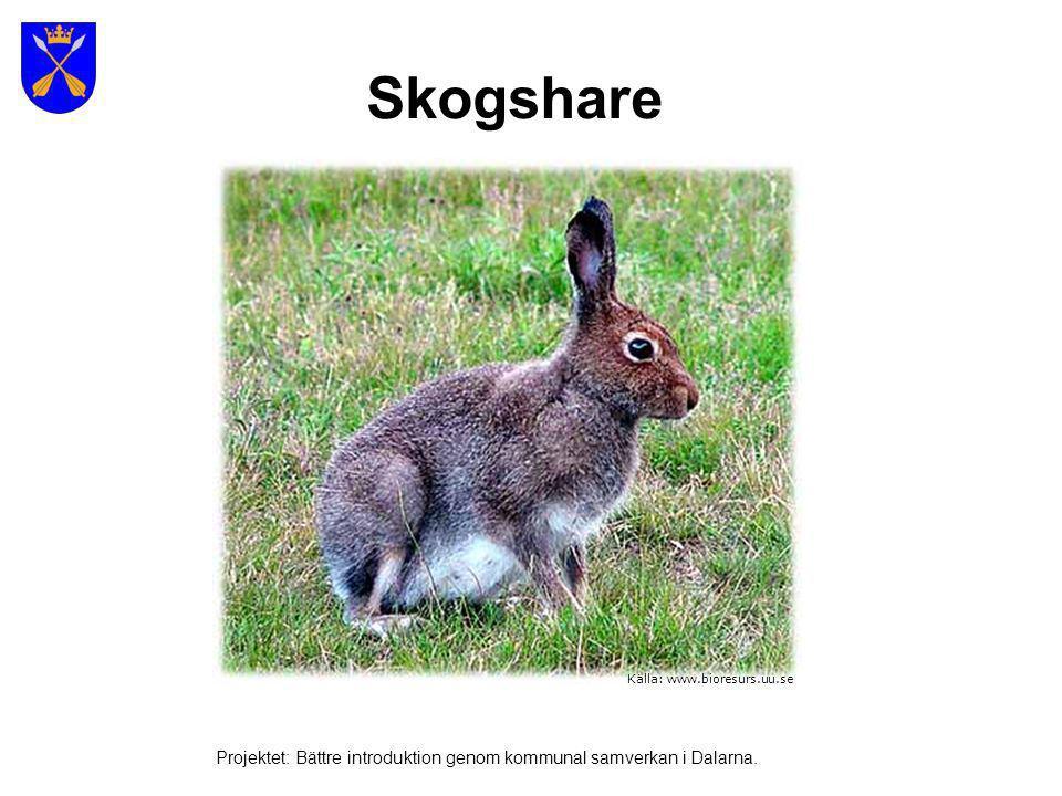 Skogshare Källa: www.bioresurs.uu.se.