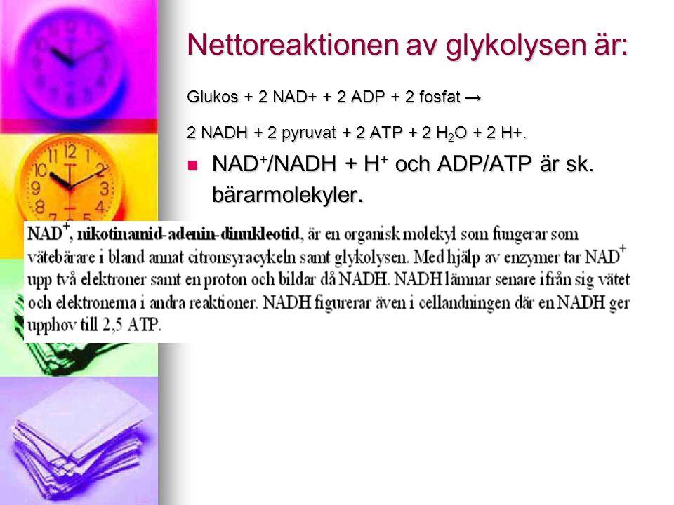 Nettoreaktionen av glykolysen är: