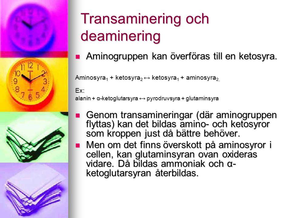 Transaminering och deaminering