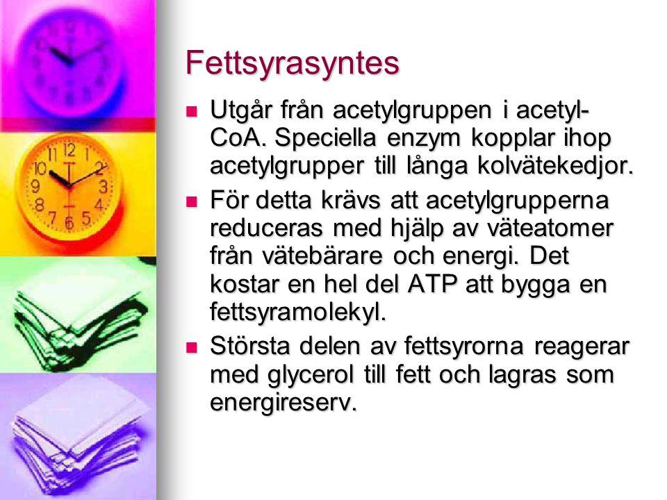 Fettsyrasyntes Utgår från acetylgruppen i acetyl-CoA. Speciella enzym kopplar ihop acetylgrupper till långa kolvätekedjor.