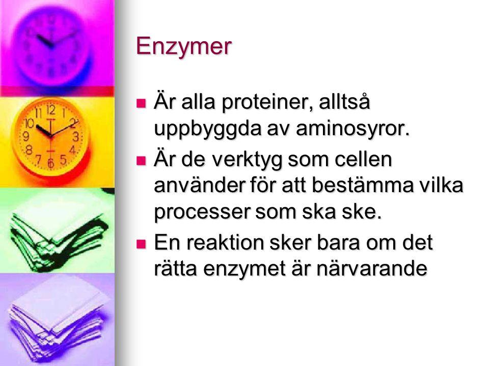 Enzymer Är alla proteiner, alltså uppbyggda av aminosyror.