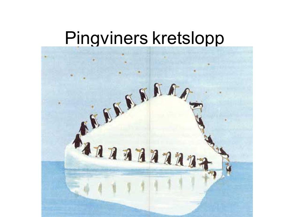 Pingviners kretslopp