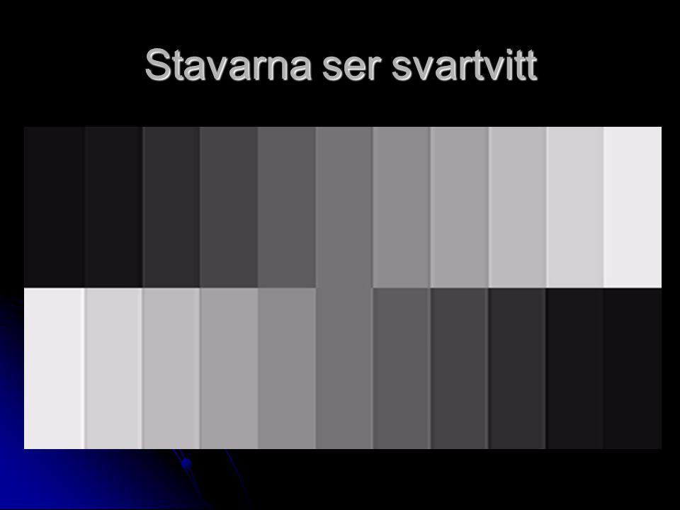 Stavarna ser svartvitt