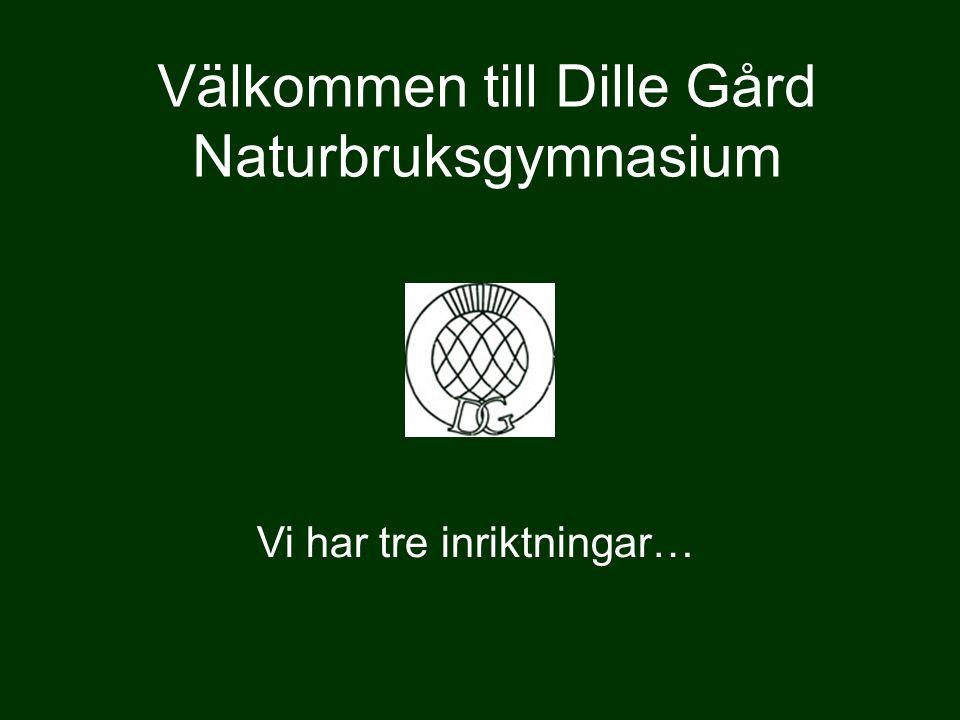 Välkommen till Dille Gård Naturbruksgymnasium