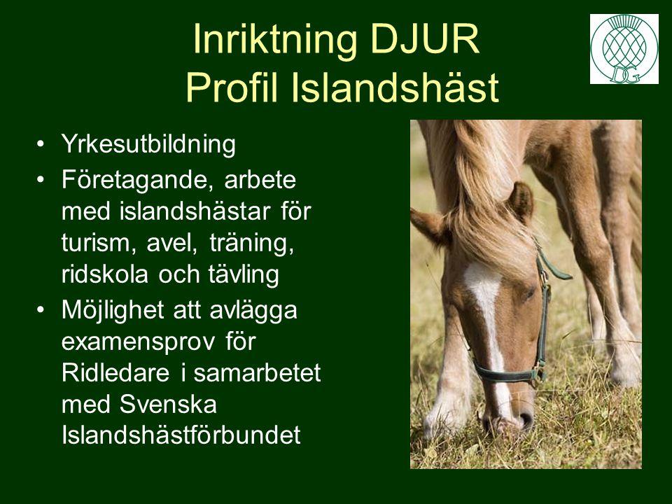 Inriktning DJUR Profil Islandshäst Yrkesutbildning