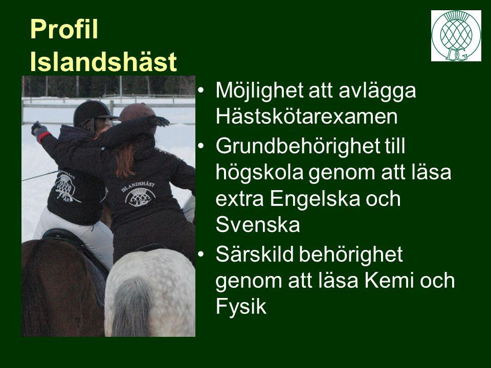 Profil Islandshäst Möjlighet att avlägga Hästskötarexamen